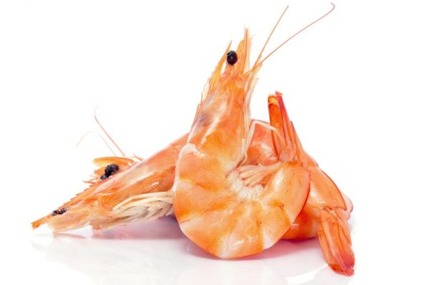 9550320 - some shrimps on a white background