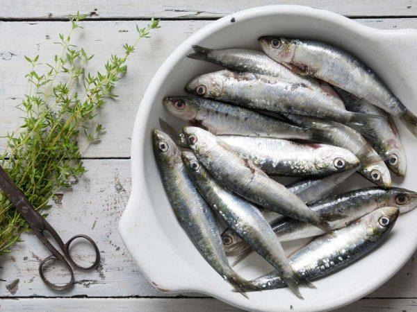 Sardines-for-web-2_600x600@2x